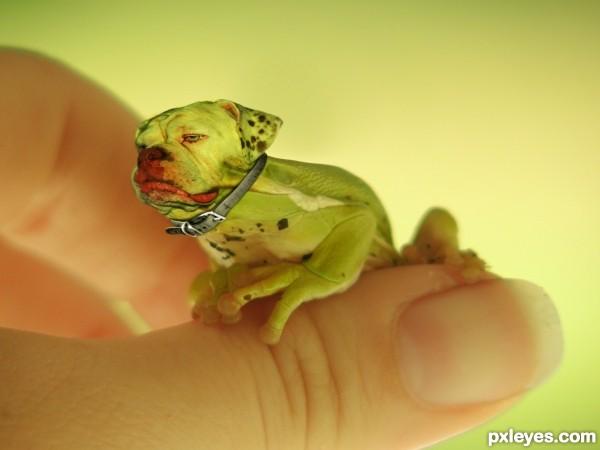 A bullfrog that barks