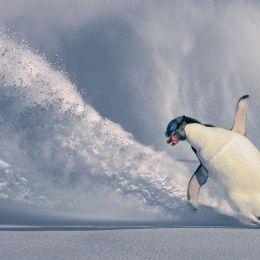 AntarcticPasttime