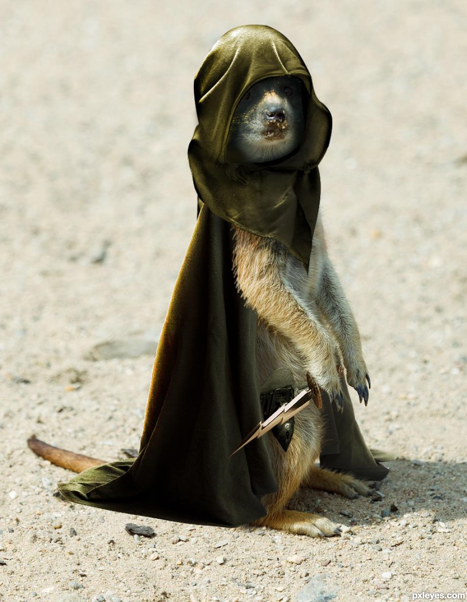 The Assassin Meerkat