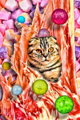 Bobboogum Kitty