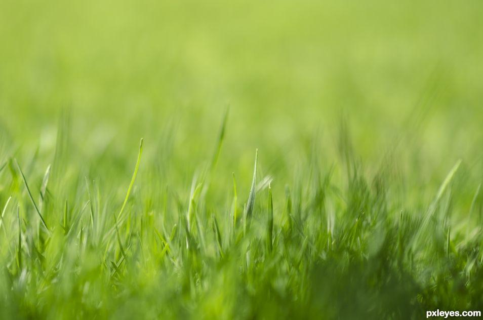Greeeeeen Grass