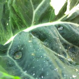 Vegetableforlife