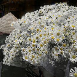 FlowerVendor