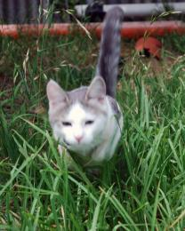 kittyblur