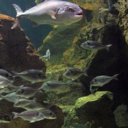 frightenedfish