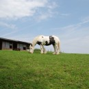 mountain horse photoshop contest