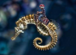 HippocampusRiding