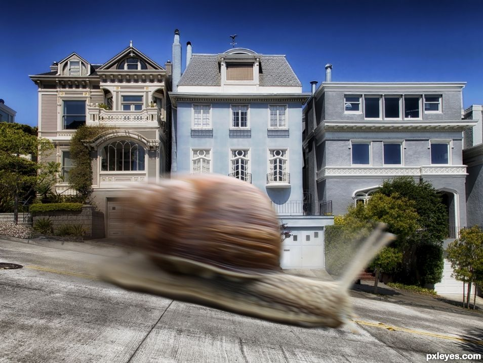 The Snail Express