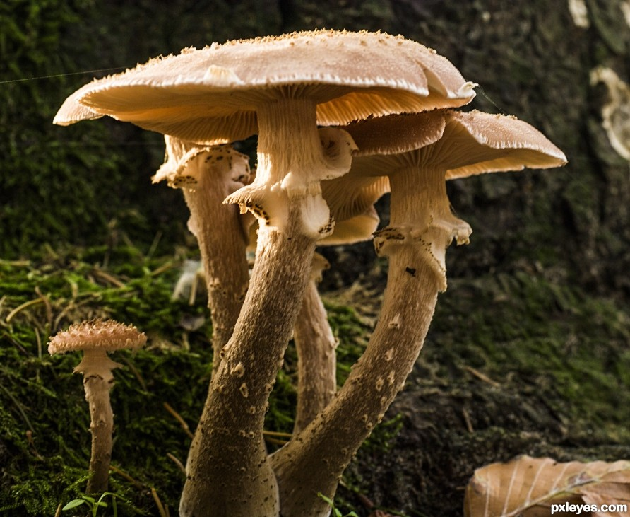 Funghi family photography picture