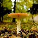 mushrooms 2 photography contest
