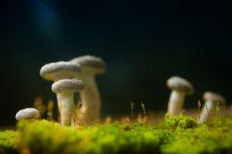 World of Mushrooms