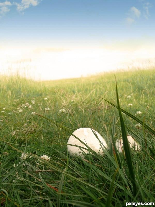 Mushroom and grass