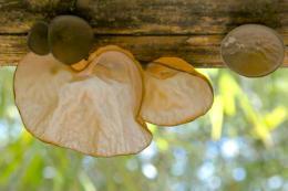 mushrooms4be3fcc289865