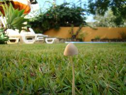 mushrooms4bedc81a8b704