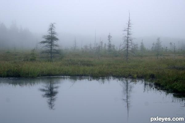 Dead tree, water, fog