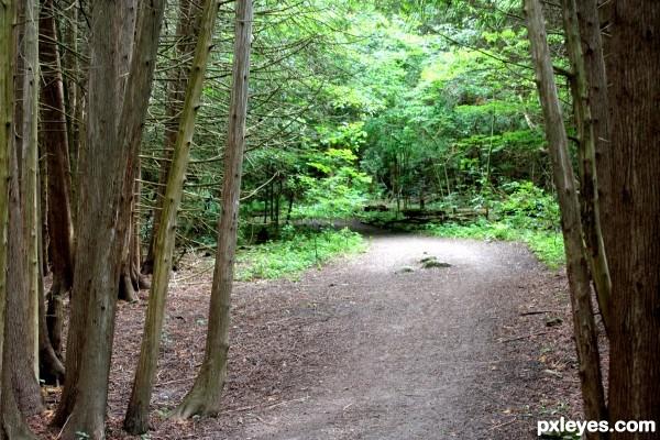 Doorway to the Woods