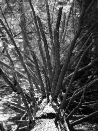 WoodlandSpears