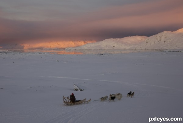 Dog sledge Greenland