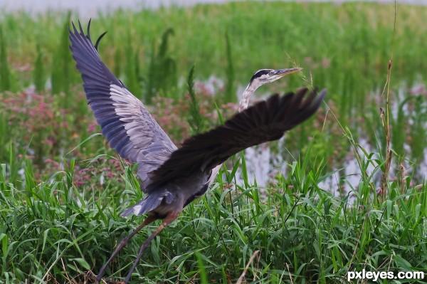 Florida Water Fowl