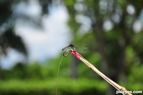 dragonfly fishing