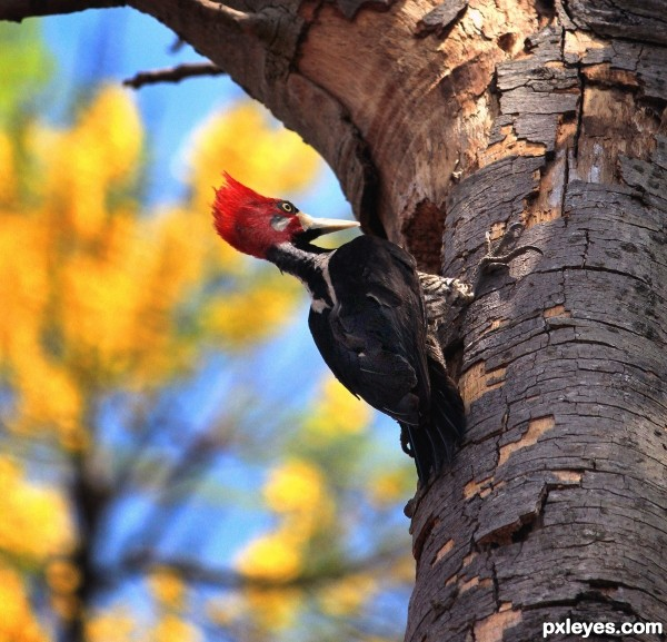 the secret life of woodpeckers