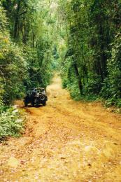 JungleAdventure