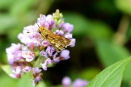 LifeofaButterfly