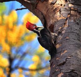 thesecretlifeofwoodpeckers