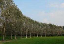 graygreencurve