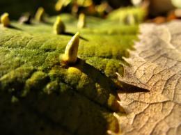 Autumnpatterns