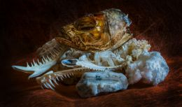 Ex-marine life