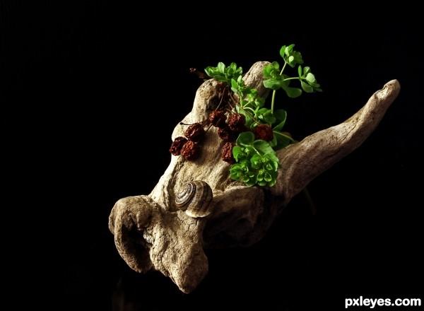 Nature on wood
