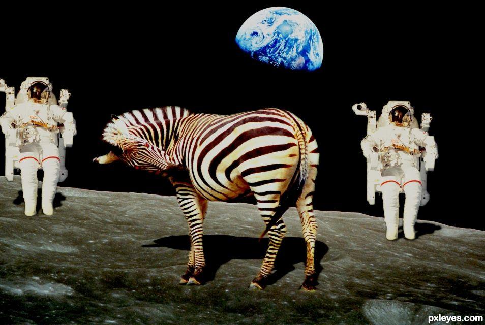 space Zebra