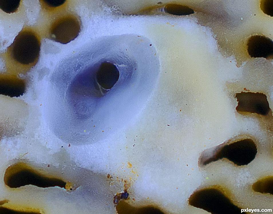 Bracket Fungus Opening