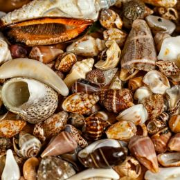 Seashells Picture