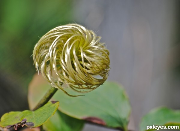 swirly plant picture by jacobeva for nature close up photography