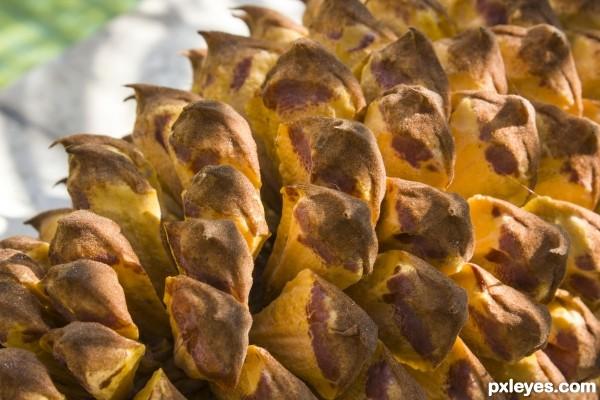 palm cone