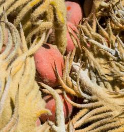 Fruitsofthepalmtree