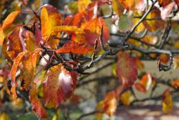 Its Autumn
