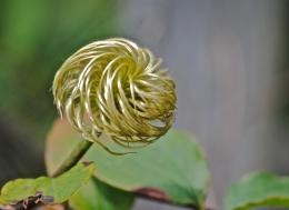 Swirly Plant