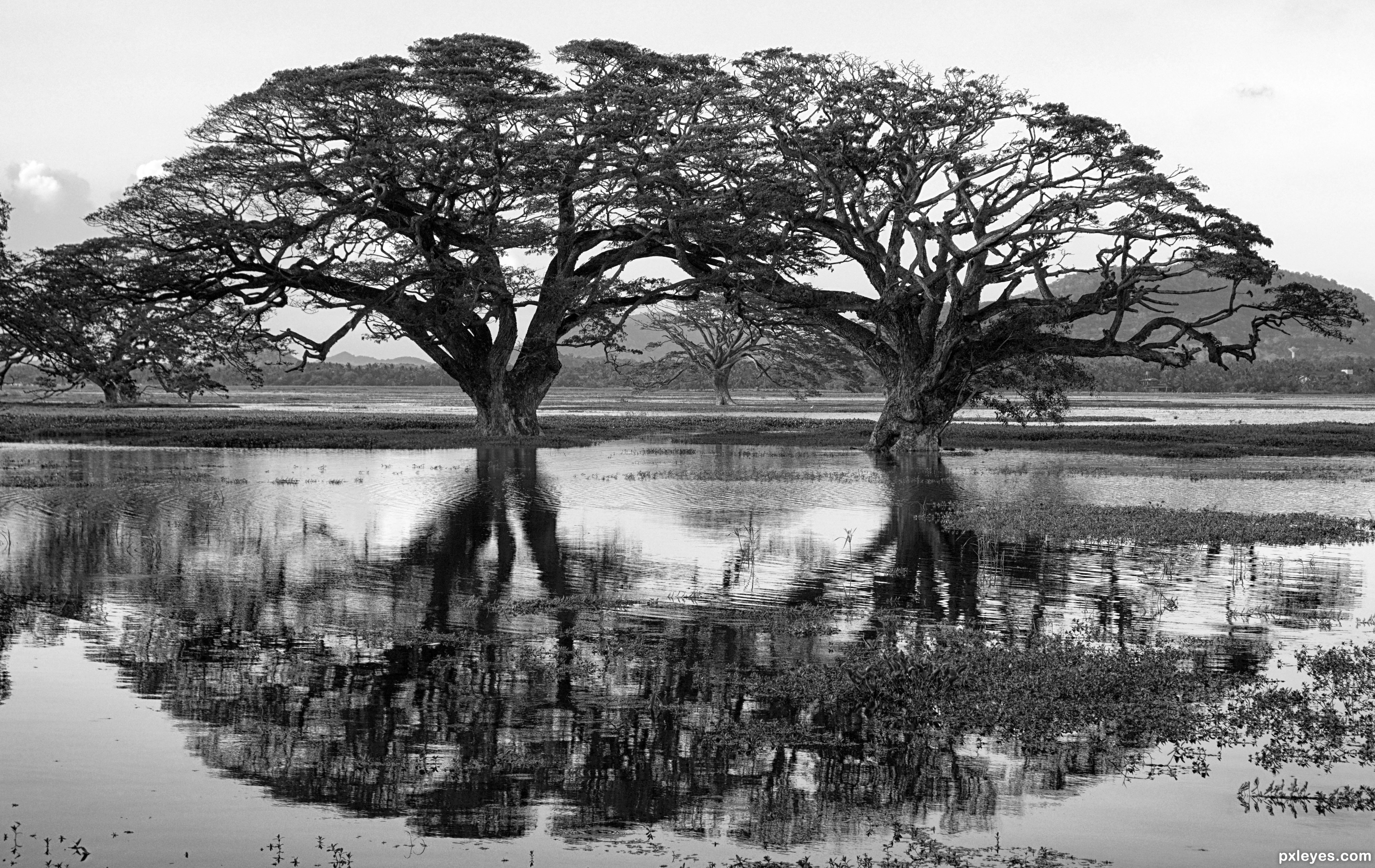 Nature in black and white photography contest 22637 pictures page twins created by still26 voltagebd Image collections