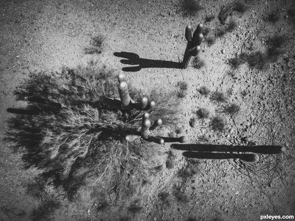 Saguaro Noir