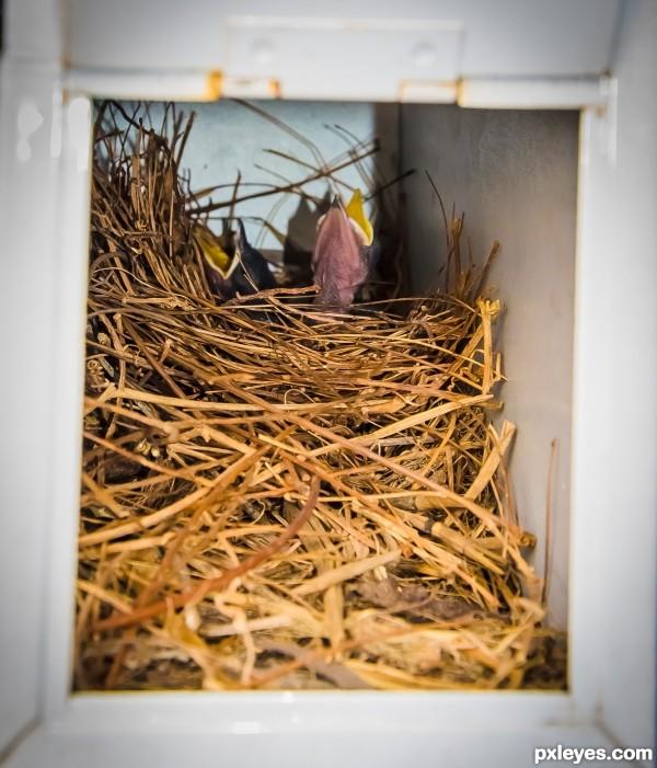 Birds nest in our mailbox