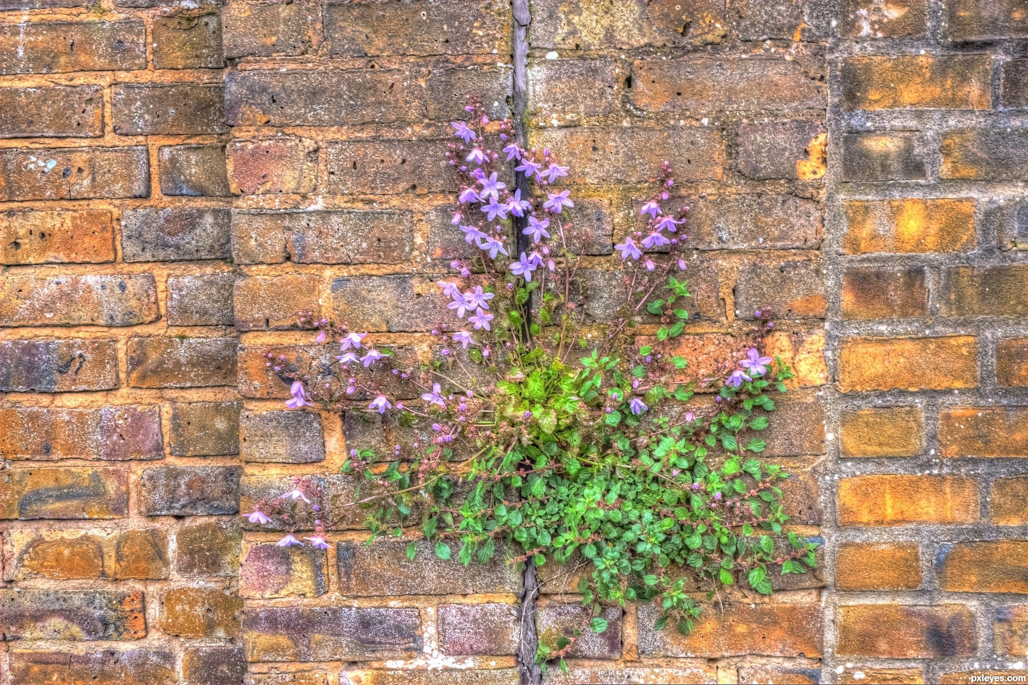 Wall Flower picture by Layzee for nature vs human 3 photography contest P