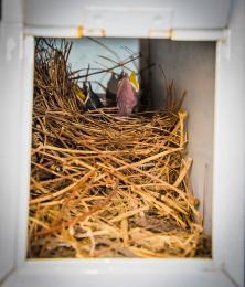 Birdsnestinourmailbox