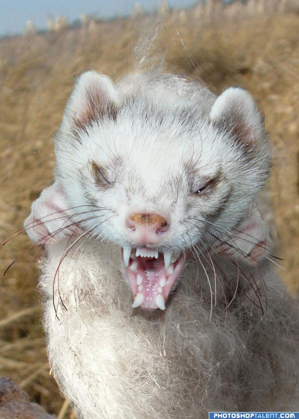 Now THATS an Ferret