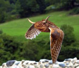 Horned Iguana Owl