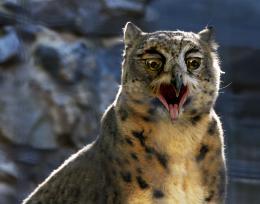 Leopard frowlg