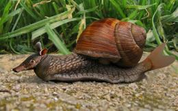 Snailfishadillo