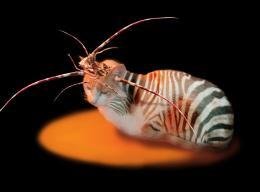 CatzeebraCrab